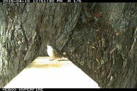 Bird - Berringa Sanctuary