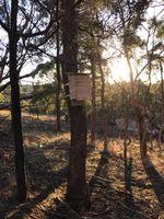 Bird Boxes - Berringa Sanctuary Berringa
