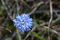 Blue Pin Cushion - Berringa Sanctuary