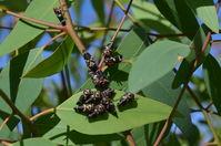 Bugs - Berringa Sanctuary