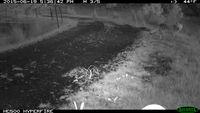 Fox - Beringa Sanctuary