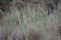 Grass - Berringa Sanctuary