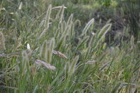 Grass - Berringa Sanctuary