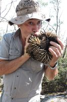 Kisses for our beautiful wildlife Echidna - Mount cole