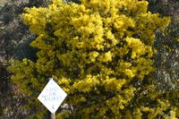 Land for Wildlife Sign with the Cootamundra Wattle