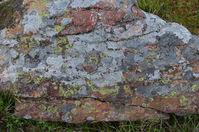 Lichen on a rock - Berringa Sanctuary