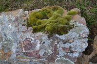 Lichen on a rock - Berringa Sanctuary