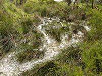 Moonlight Creek Borders the western side of the property  The Block Berringa