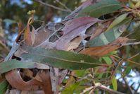 Nest - Berringa Sanctuary