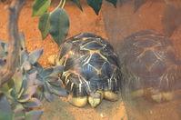 Perth Zoo - W.A