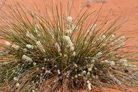 Plant - Scotia A.W.C