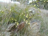 Prickly Moses - Beringa Sanctuary