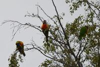 Rainbow Lorikeet - Berringa Sanctuary