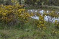 Top Swamp - Berringa Sanctuary