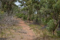 Walyunga National Park - W.A
