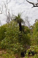 Walyunga National Park - W.A