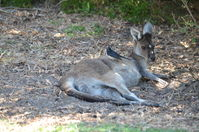 Yanchep National Park W.A